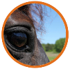 Paarden pensionstalling